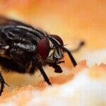 Ask Me Anything: Fruit Flies, Rusty Garden Tools, Eufy HomeVac HEPA-Style Filters
