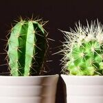7 Common Houseplants That Are Pet-Friendly and Low-Maintenance