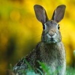 How to Get Rid of Rabbits Ruining Your Lawn and Garden