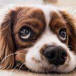 Smart Ways to Save Money on Pet Care