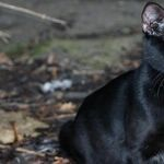 Mercury Lauds Friday the 13th
