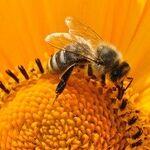 Busy-Bee Moon