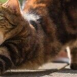 Venus the Kitty Cat