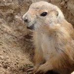 The Groundhog and Venus