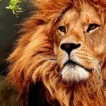 Venus the Lionheart