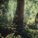 The Fox and the Golden Retriever
