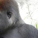 Gators, Gorillas, Tragedy and Blame