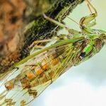 This Should Bug You More Than Cicadas