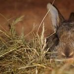 Bunny Tales for Easter and Every Day