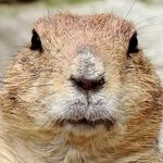 The Deep Meaning of Groundhog Day