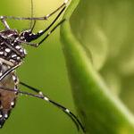 CDC Dropping the Ball on Zika
