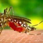 Zika's Nasty Facts