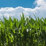 Free Market Principles Missing in Ethanol Rule Changes