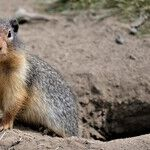 It's Groundhog Day All Over Again in Washington