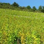 Gorgeous Wines of Alsace