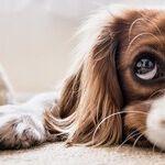 Socializing a Skittish Dog