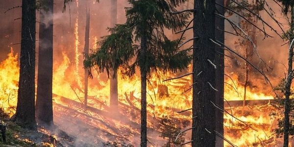 The Burning Issue with California Fires