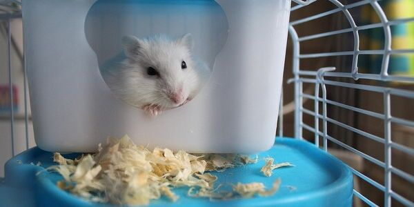 Looking to Hop Off the Hamster Wheel